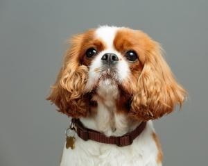 professional- pet-dog-photography-ascot-sunninghill-bracknell-ian j bradshaw